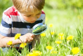 Little boy exploring nature