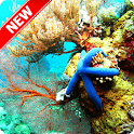 Amazing Underwater Wallpaper icon