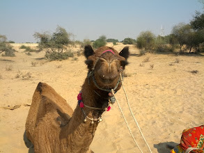 Photo: Daloo, you handsome camel.