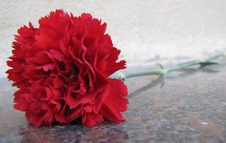 Bloemen en hun symbolische kleurbetekenis
