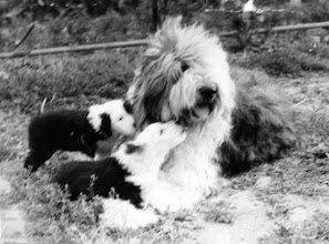 Photo: Dixie v Zatisi with her puppies
