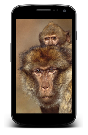 Monkey Background Wallpaper HD