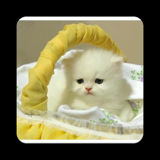 The Cutest Cat Ever (app)