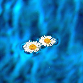 Sunny Side Up. by Alicia Lockwood - Nature Up Close Flowers - 2011-2013 ( water, nature, flower )