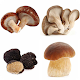 Угадай грибы icon