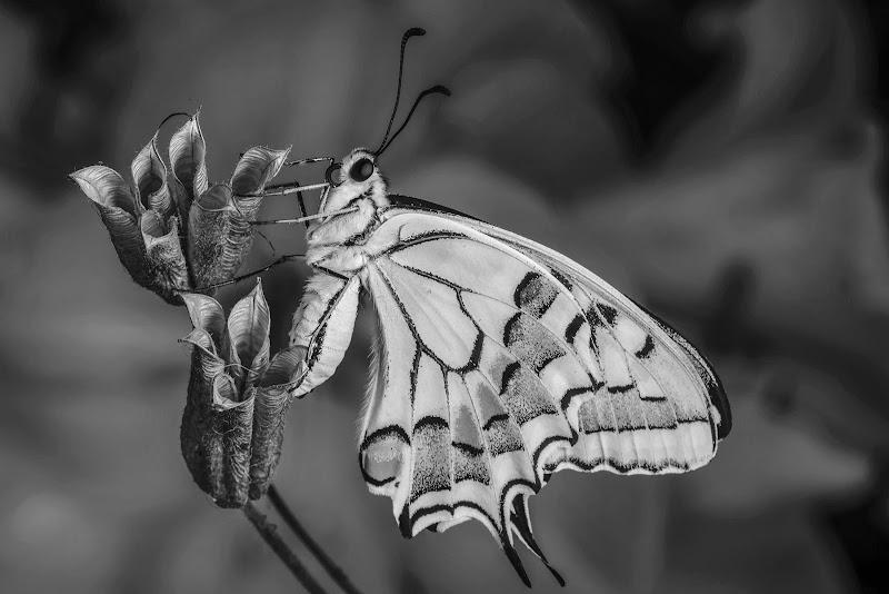 I colori...in bianco e nero... di stefanogaleotti