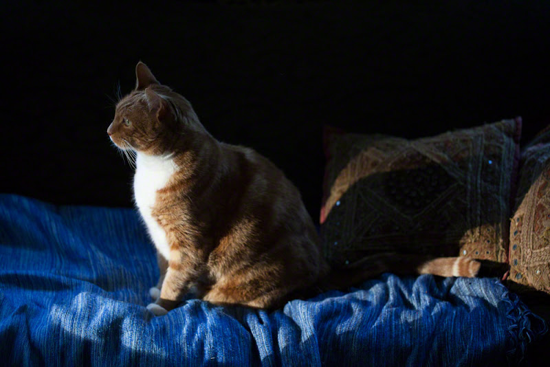 Photo: Marlow watching the sunrise from the window, finding a ray of light of his own.  #creative366project