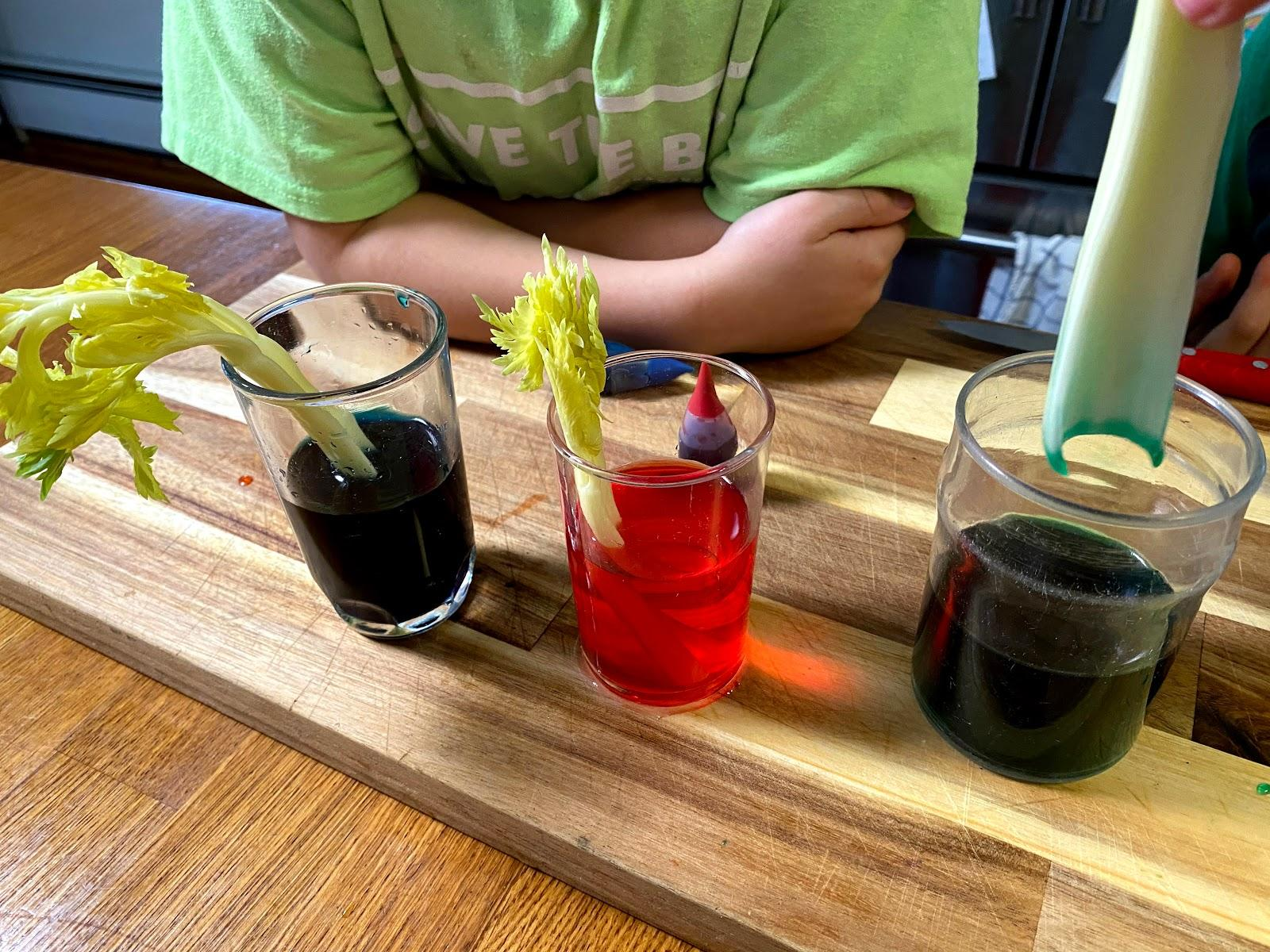 Placing a stalk of celery into water dyed with green food coloring.