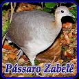 Pássaro Zabelê Ouça icon
