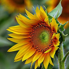by Karen McKenzie McAdoo - Flowers Flowers in the Wild (  )