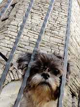Photo: Little fluffy puppy trying to squeeze through bars.