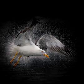 by Sverre Sebjørnsen - Digital Art Animals ( birds )