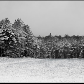 Treeline2 by Alex Newstead - Landscapes Forests ( contrast, england, uk, park, snow, white, forest, monotone, hampshire, black )