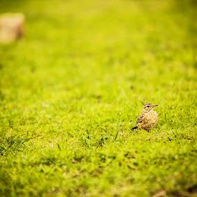Tiny Bird by Naveen Kadam - Animals Birds