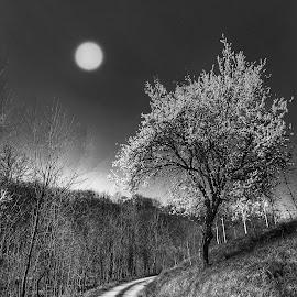 by Mario Pavlić - Black & White Landscapes