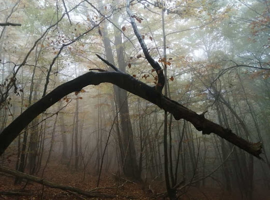 Il fascino del bosco d'autunno