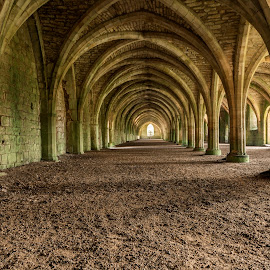 Vaulted cellarium by Darrell Evans - Buildings & Architecture Other Interior ( stonework, historic, columns, old, cistercian, cellarium, medieval, historical, tourism, history, building, stone, abbey, monastery, fountains abbey, vaulted, lay brothers, arch, no people, ruin, architecture )