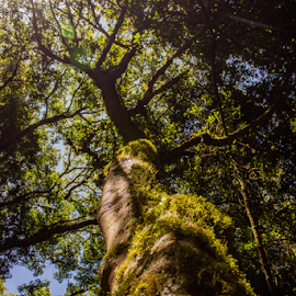 Moss on a tree by Peet Snyder - Nature Up Close Trees & Bushes ( tree tops, moss, tree bark, sunlight, nature, tree, sun,  )