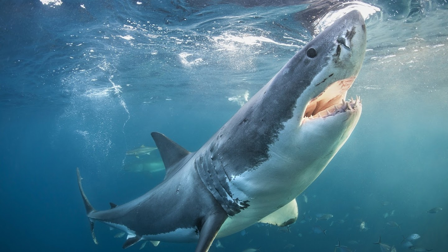 Watch The Daily Bite: Countdown to Shark Week live