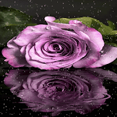 Purple Rainy Flower LWP