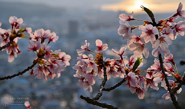 Photo: Sunrise in Okayama Prefecture Japan ||  岡山の日の入り