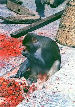 Photo: Katmandu - małpka w Swayambunath / A monkey in Swayambunath