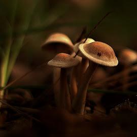 Early Light  by Gary Latone - Nature Up Close Mushrooms & Fungi