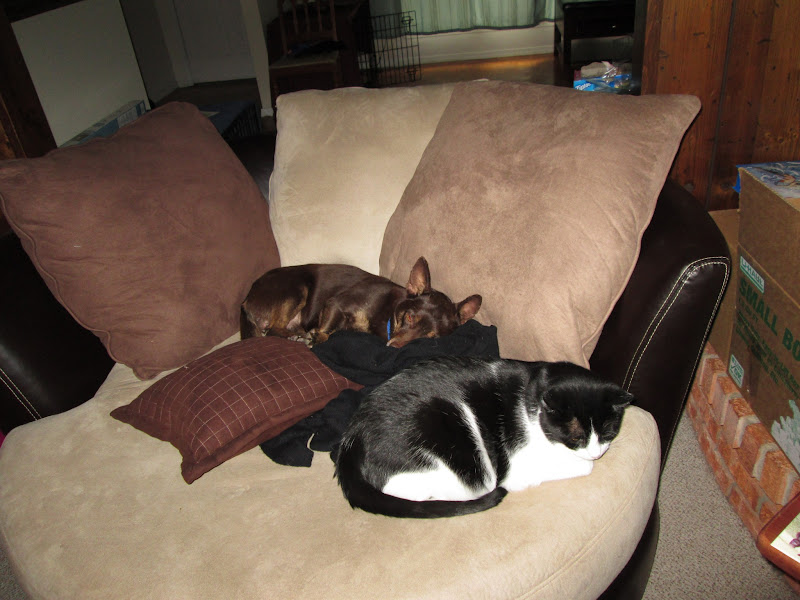 Photo: Cocoa and Mister. They went from snarling and snapping to sleeping together.