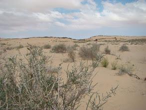 Photo: pustynia wiele ma twarzy