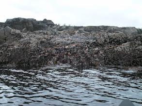 Photo: Starfish and sea weed.