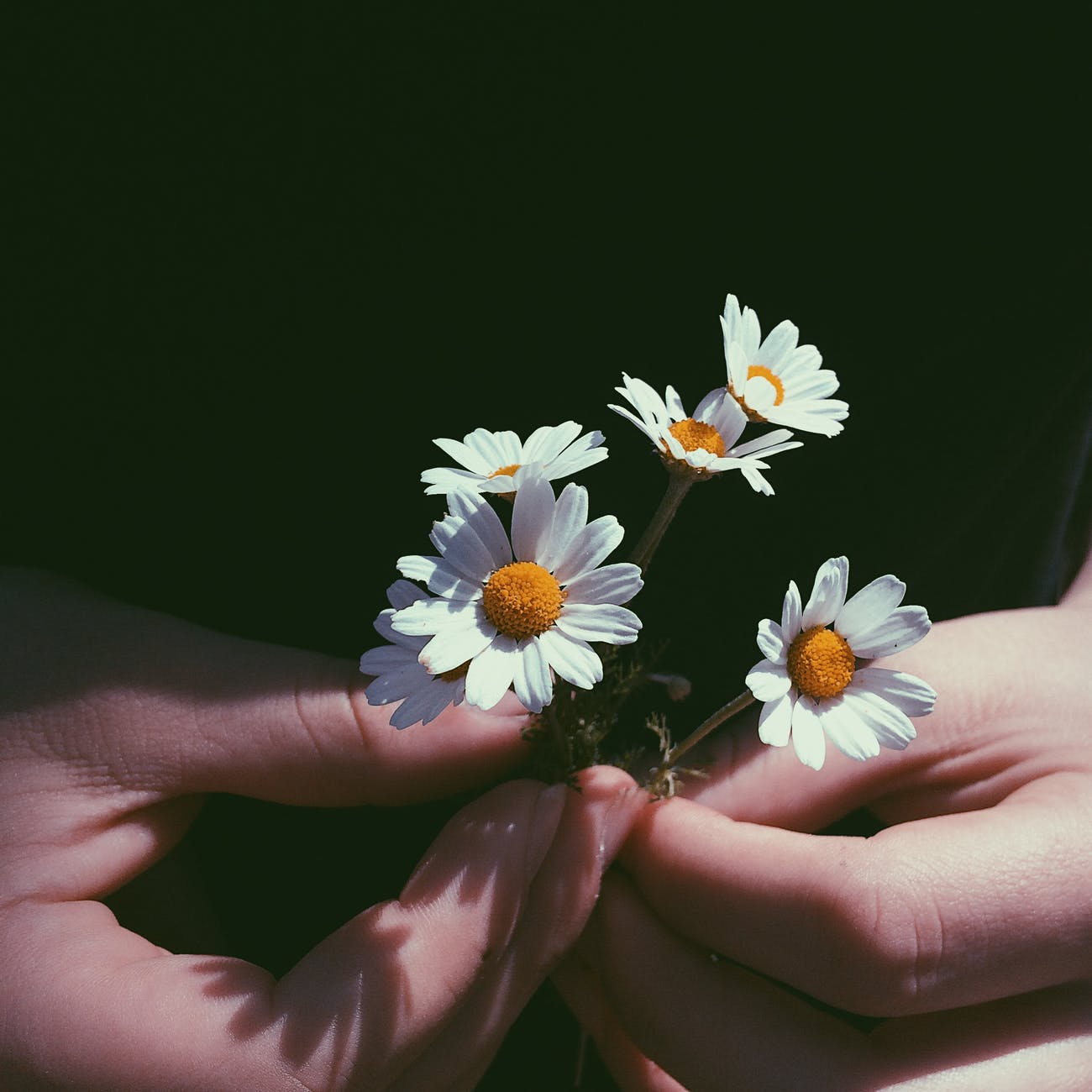 natural remedies for depression chamomile