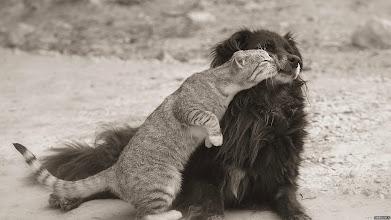 Photo: Buds  Source: http://webdiscover.ru/v/56730-kak-koshka-s-sobakoj.html