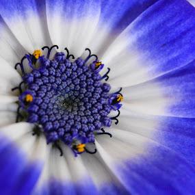 by Nil Jay - Flowers Single Flower
