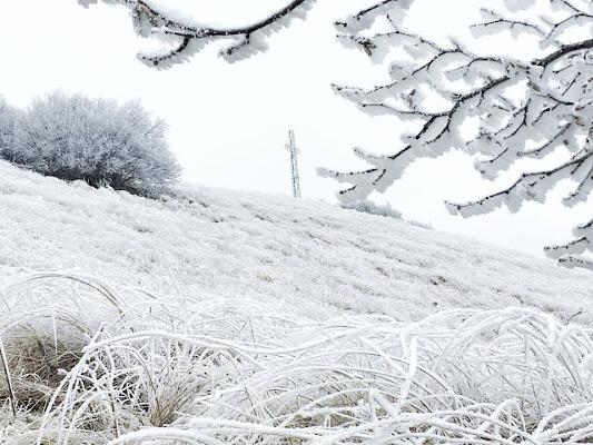 sembra neve... galaverna bianca di tizicarra