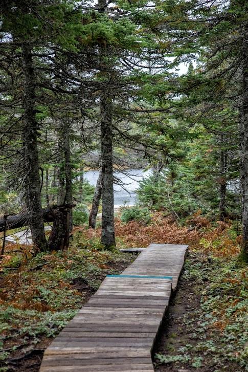 punkt widokowy, Cabot Trail, Park Narodowy Cape Breton Highlands, Nowa Szkocja, Kanada