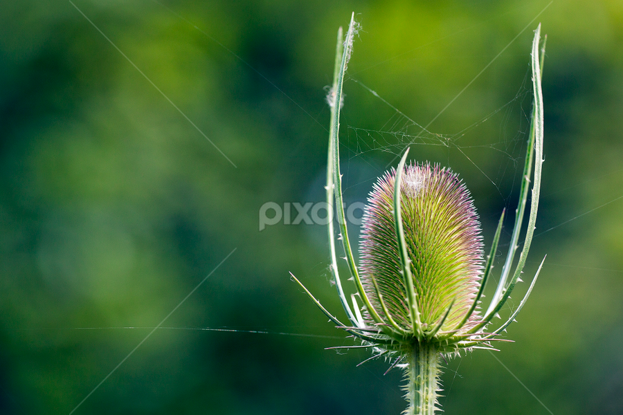 Flower 2 by Fabien Dortu - Nature Up Close Flowers - 2011-2013