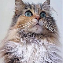 joe by Ronald Wahyudi - Animals - Cats Portraits