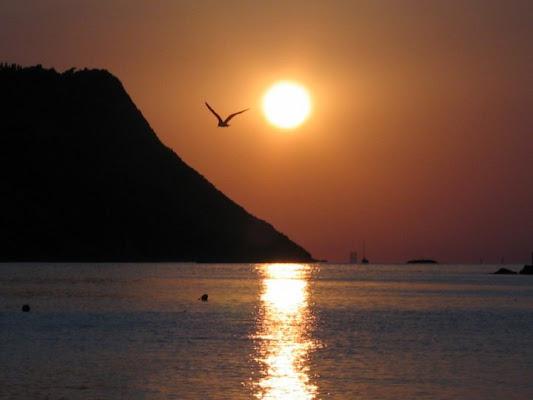 il tramonto e il gabbiano di barbaresi
