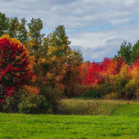 A Colorful Meadow by Bob Minnie - Nature Up Close Trees & Bushes