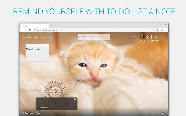 Cute Kittens & Kitty Cats Wallpaper HD NewTab
