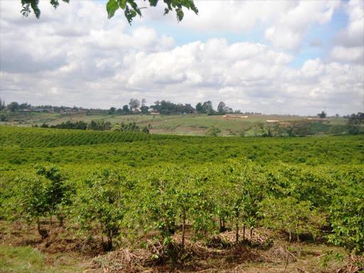 Kisii to improve coffee farming