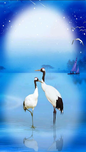 湖畔的丹顶鹤