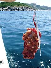 Photo: げげっ! 魚を釣ろう!  反対舷ではキャスティング! 数回出たんですが・・。乗らない。