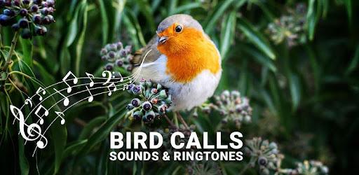 Bird Calls, Sounds & Ringtones - Apps on Google Play