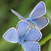 Приметы про бабочек