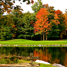 Golf Green by David W Hubbs - Nature Up Close Trees & Bushes ( fall colors, autumn leaves, autumn, fall, autumn landscape, autumn colors, landscape )