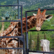 Zoo Jigsaw Puzzle Game icon