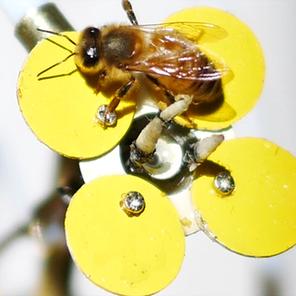 Esto es lo último… flores robot que dispensan polen para abejas