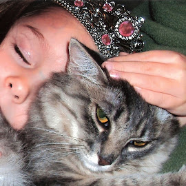 My princesses by Cathy Henson - Animals - Cats Portraits ( princess, tiara, cricket, sleeping, jewels,  )