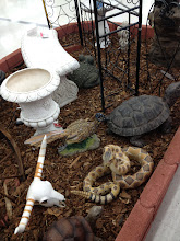 Photo: One thing I noticed while looking at patio sets is that Kmart had a LOT of really cool garden decoration items. They had this realistic looking rattle snake, tortoise, skull, and roadrunner. They were all good sized, so someone would really be able to see them if you place them outside your house or in a garden.